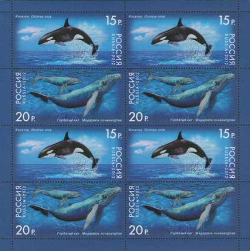 Fauna of Russia. Whales.