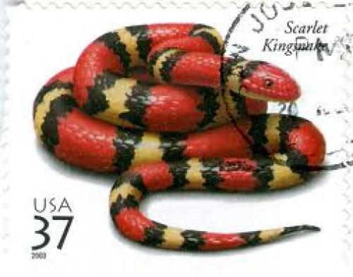 Stamps U.S; 37 cents; Scarlet kingsnake on a US Postage Stamp