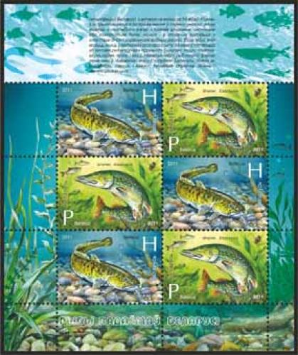 BELARUS, fish,2011