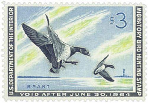 Brant Landing Ducks