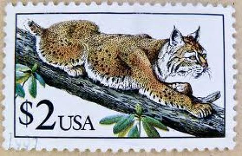 Stamp USA $ 2.00 two Dollar postage lynx timbre selos USA francobolli u.s. ...