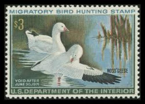 "Stamps; 1970-1971 Ross' Geese Image First intaglio/offset printed ""Duck"" stamp"