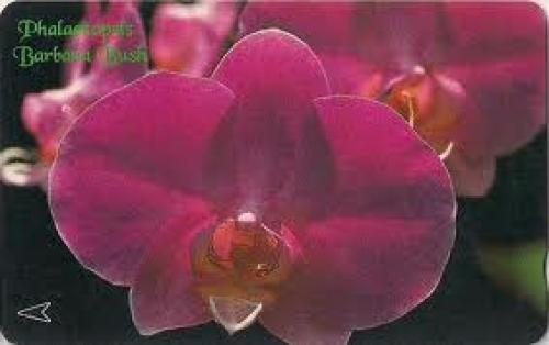Singapore Phone Card. Phalaenopsis,(Barbara Bush)
