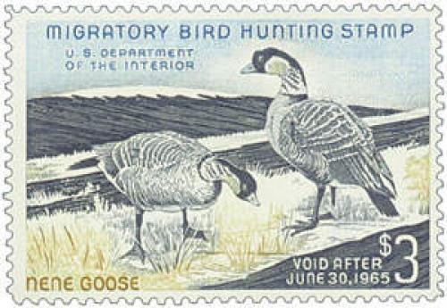 Hawaiian Nene Geese