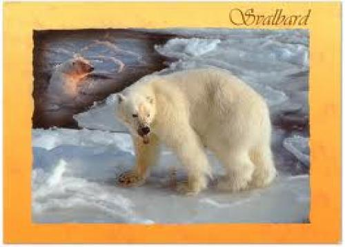 Norway: Polar Bear Stamp and Postcard (2008)